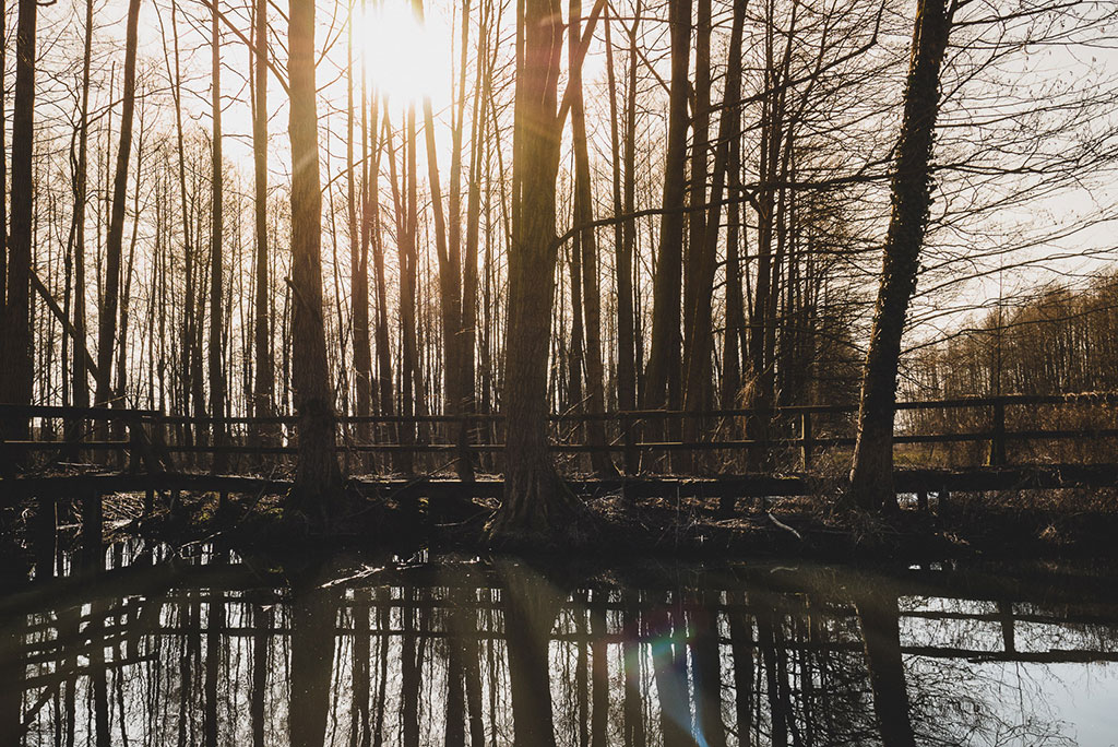 Kahnfahrt im Spreewald im Winter Brandenburg