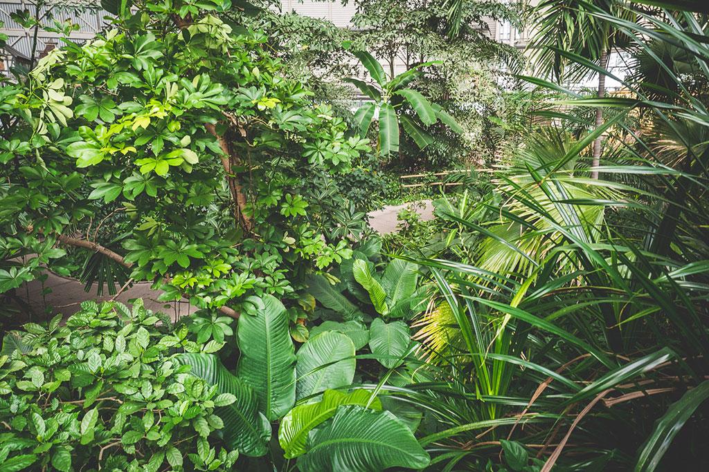 Tropical Islands Spreewald Brandenburg