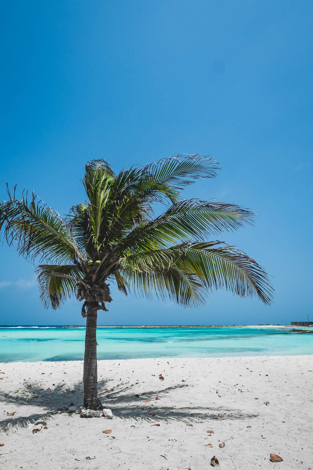 Palme am Strand Baby Beach Aruba
