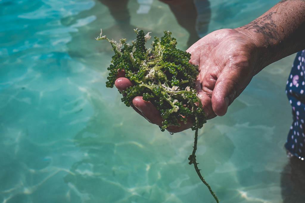 Kochkurs Mangel Halto Aruba Hand hält Algen