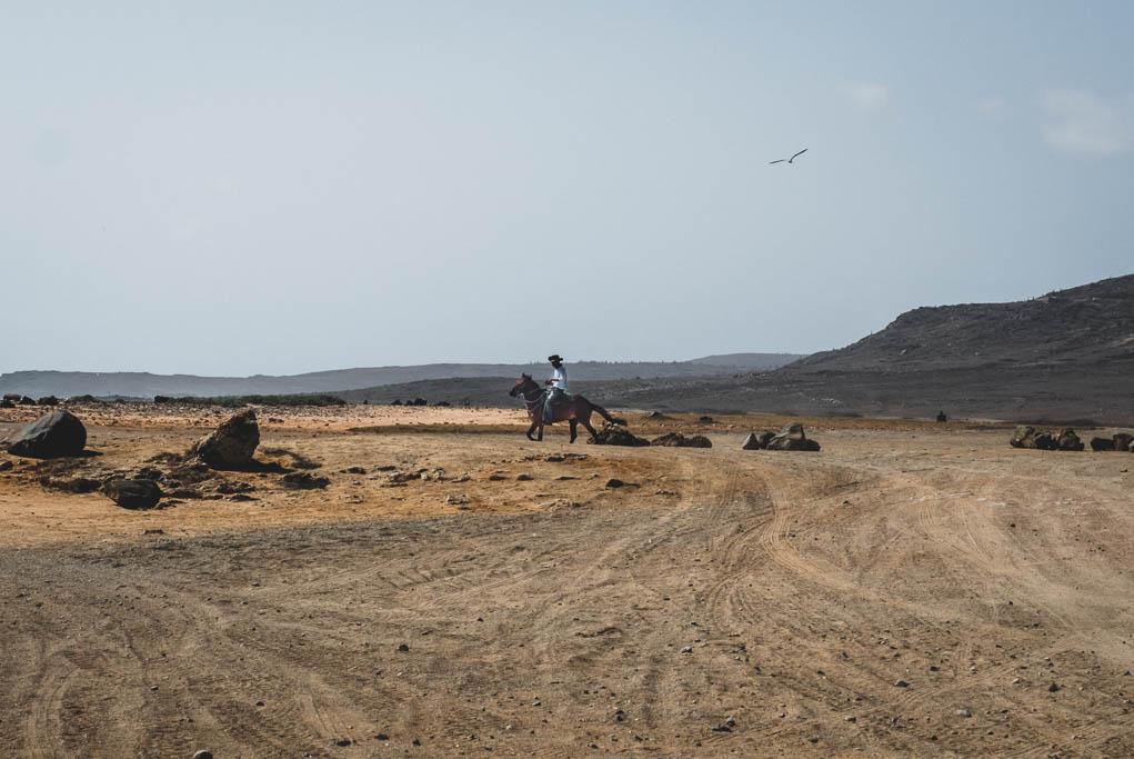 Pferd mit Reiter im Norden von Aruba