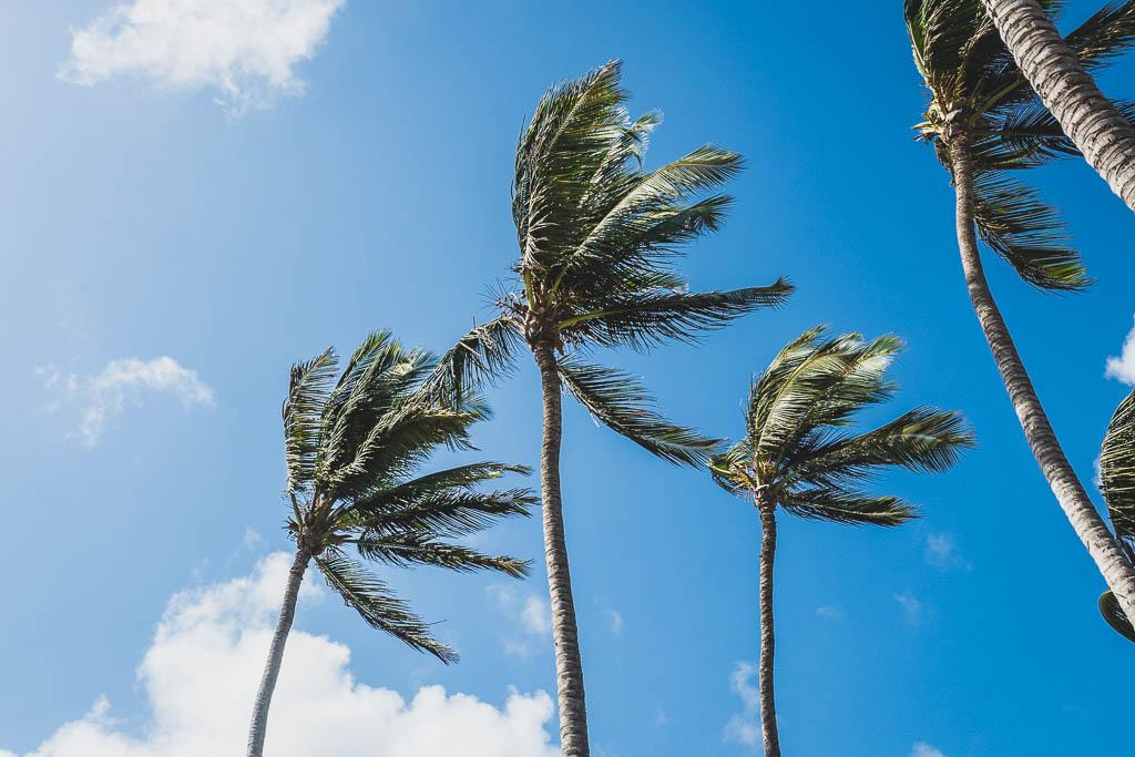 Palmen auf Aruba vor blauem Himmel