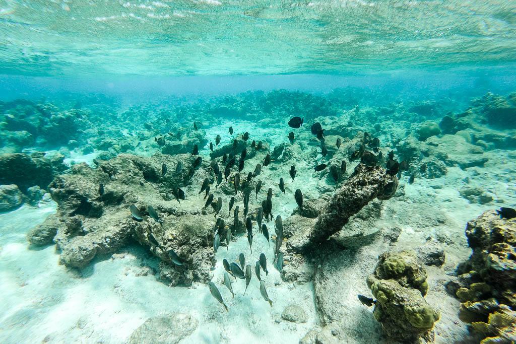 Tauchen in der spanischen Lagune Aruba