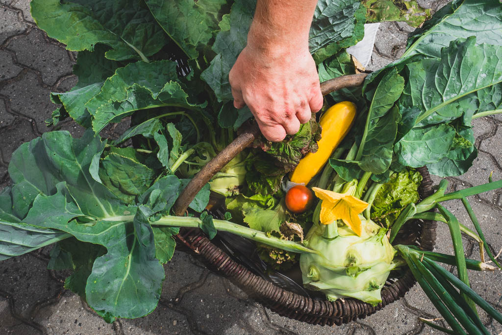 Hand hält großen Korb voller selbst geerntetem Gemüse