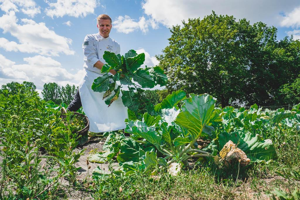 Der Koch Daniel Reuner trägt selbst geernteten Kohlrabi im Feld des Flair Hotel Reuner