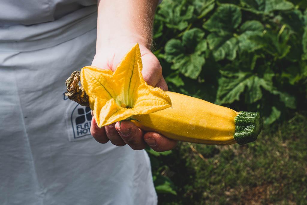 Hand hält gelbe Zucchini und Zucchiniblüte