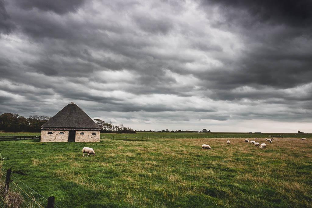 Scheune und Weide mit Schafen Käse-Bauernhof Wezenspyk