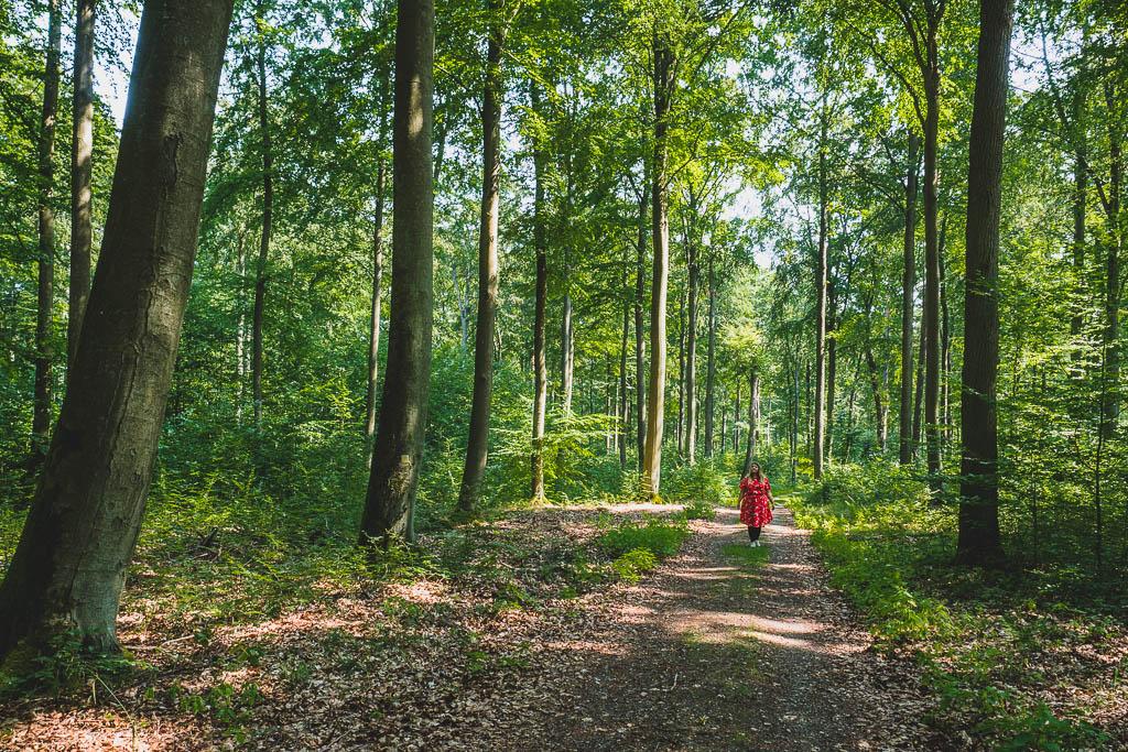 Wanderweg durch den Wald Kloster Chorin Brandenburg
