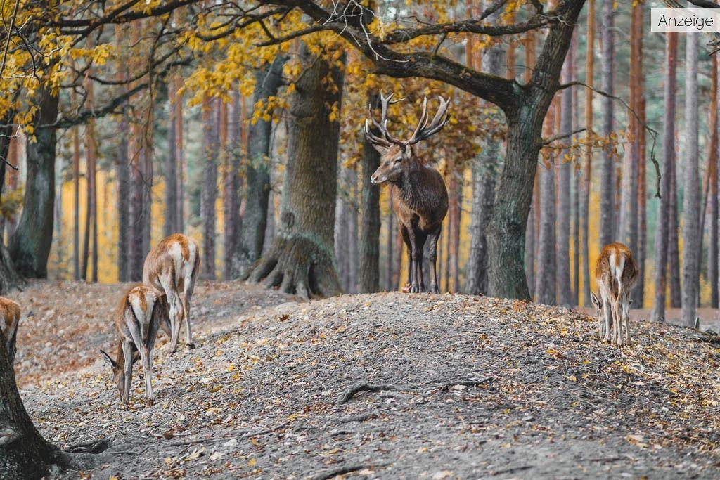 HirschWildpark Johannismühle Baruth Brandenburg