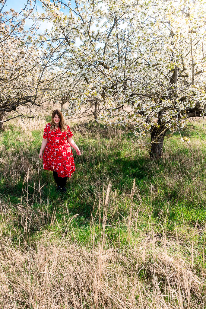 Frau unter Kirschbaum Baumblüte Werder Brandenburg