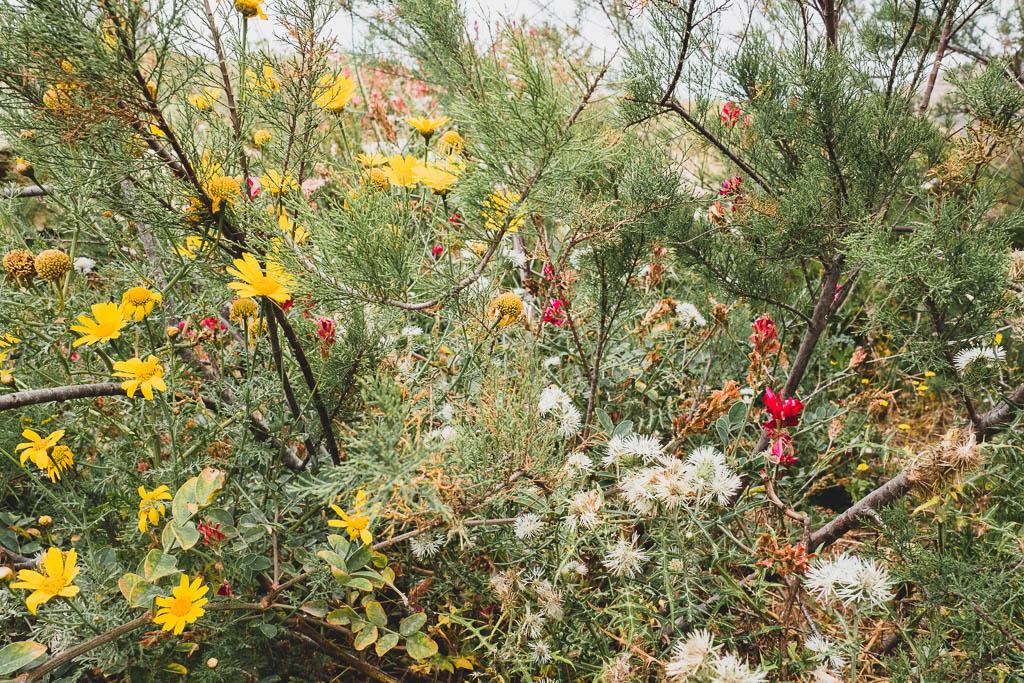 Pflanzen Gozo