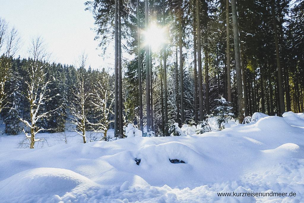 Mit dem Pferdeschlitten durch den Harz im Winter