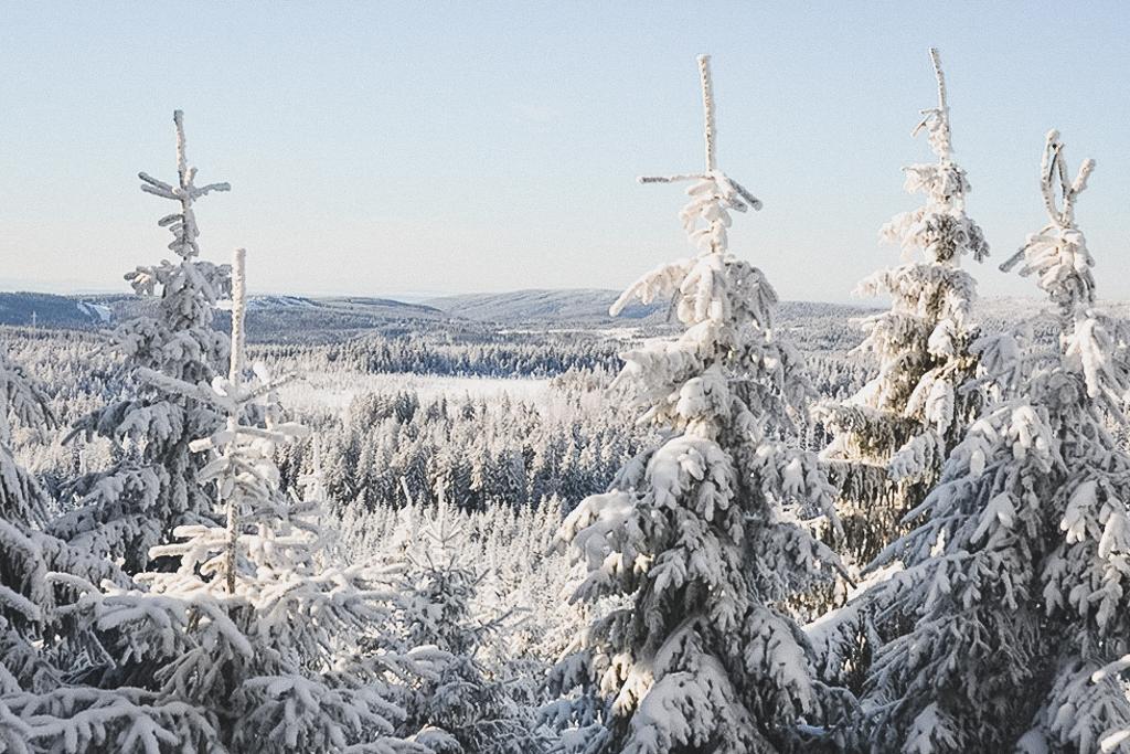 Wald mit Schnee Winter-Wanderung im Harz