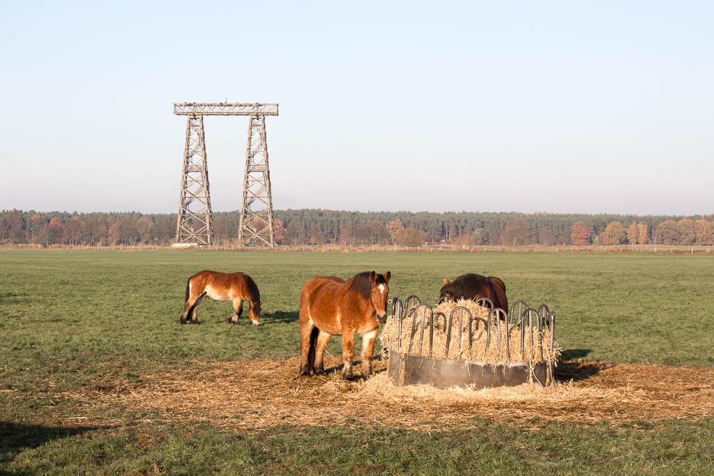 Holztürme Brück Ausflug Brandenburg