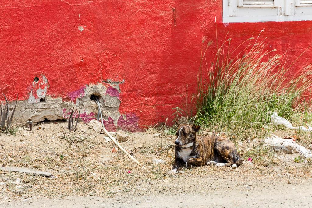Hund Curaçao Restaurant Hofi Cas Cora Curaçao