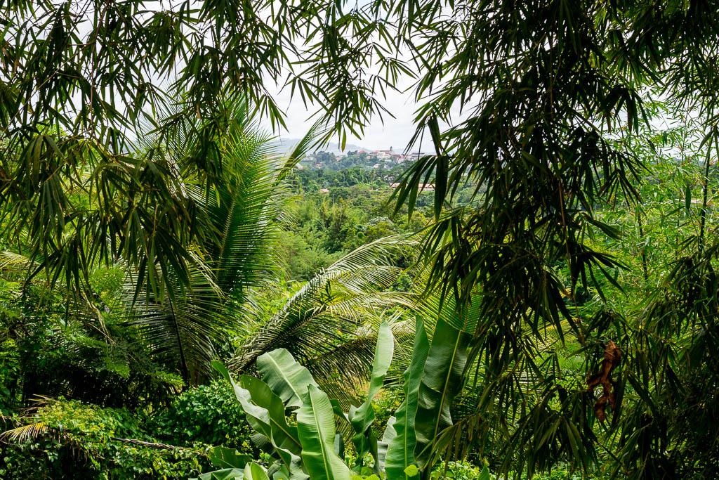 Regenwald Lakou A Martinique Geheimtipp