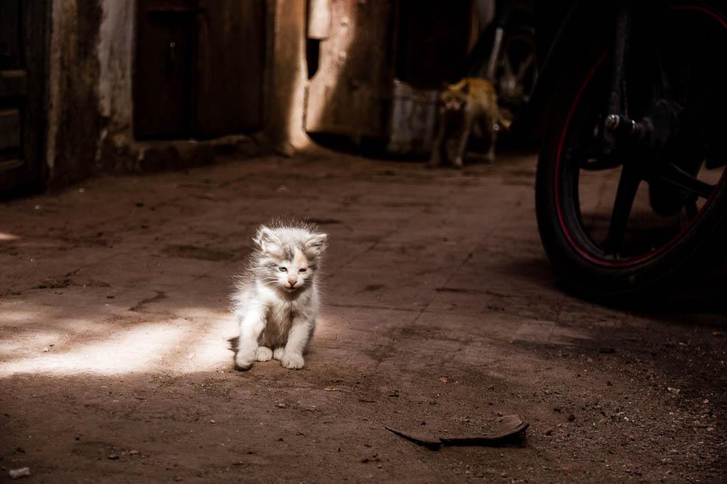 Katze Souk Marrakesch