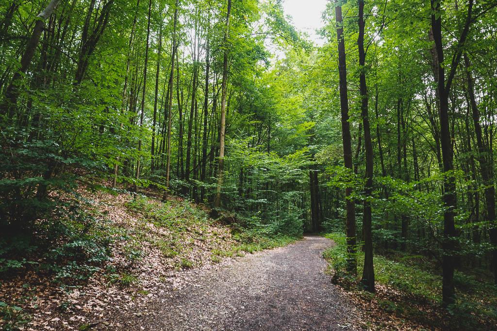 Wald Teufelshöhle Steinau an der Straße