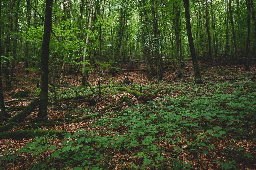 Wald Wald Teufelshöhle Steinau an der Straße