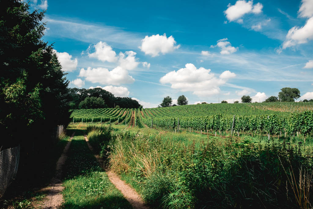 Wanderweg von Meißen durch die Weinberge zur Bennokanzel
