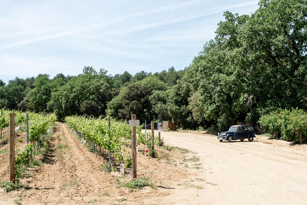 Weingut Can Roda Geheimtipp im Umland von Barcelona