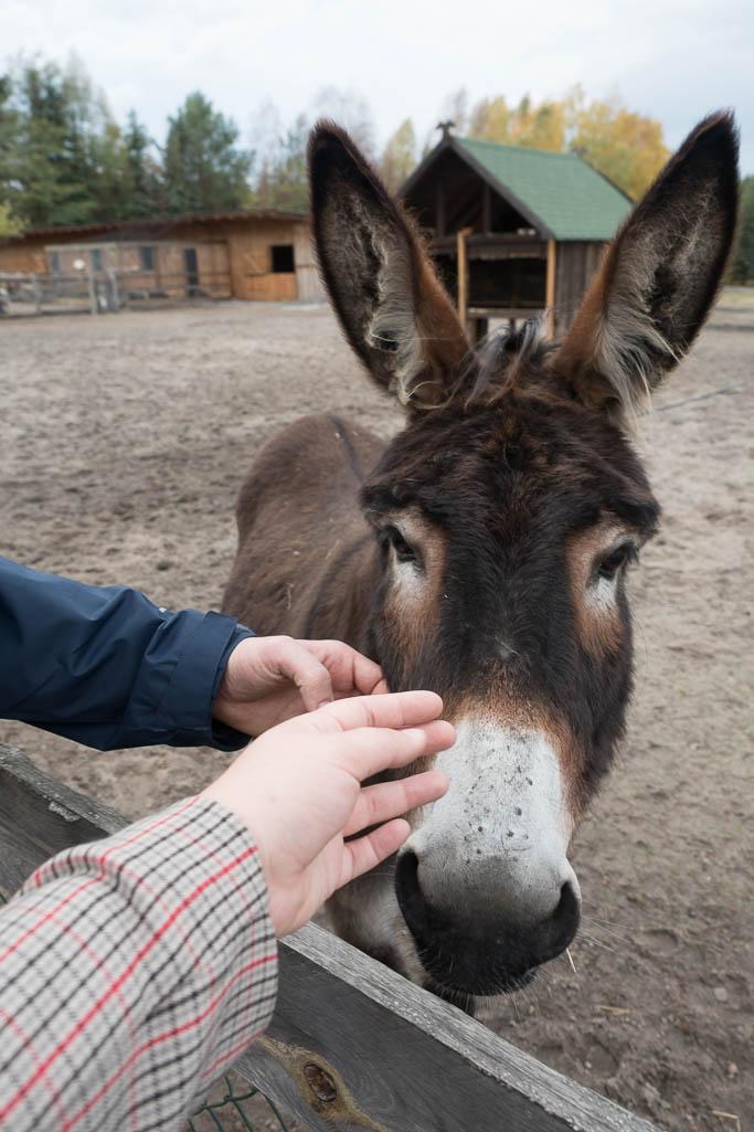 Esel Wildpark Johannismühle Baruth Brandenburg