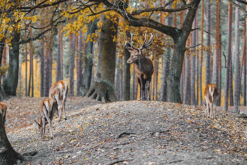 Hirsch Wildpark Johannismühle Baruth Brandenburg