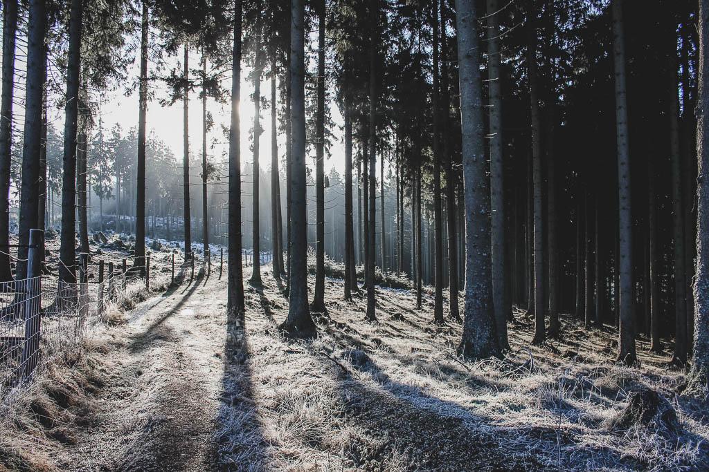 Wisent-Welt am Rothaarsteig im Winter