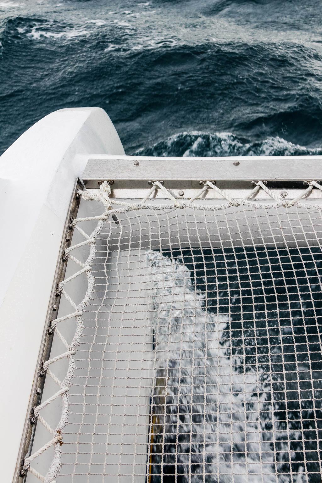 Tauchen mit Thunfischen L'Ametlla de Mar an der Costa Daurada