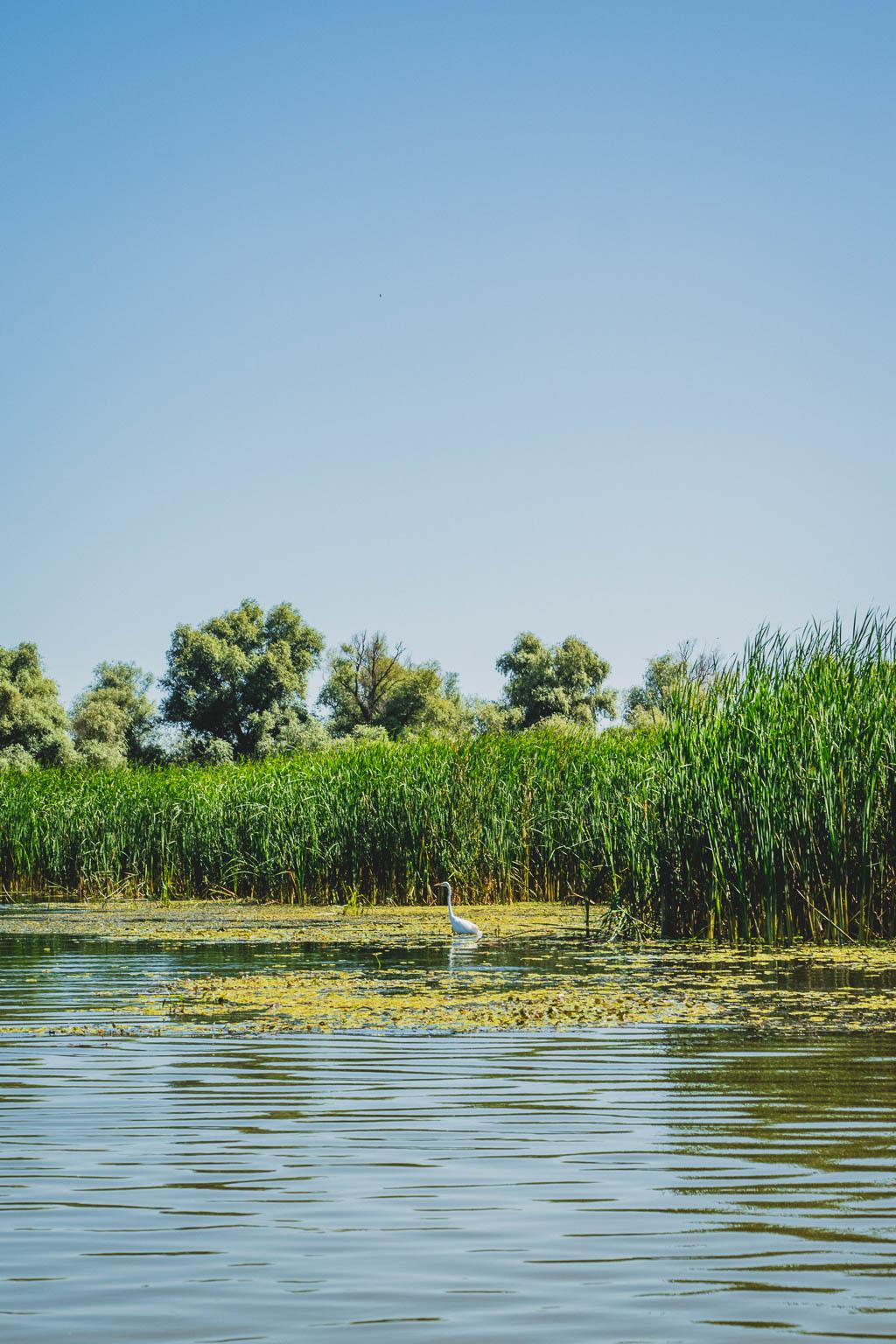 Bootstour von Tulcea in das Donaudelta Rumänien
