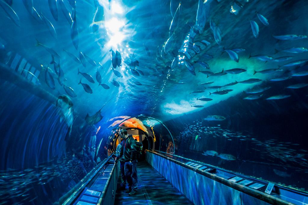 Glastunnel im Aquariom of the Bay San Francisco in 3 Tagen aktiv entdecken – Reisetipps, Highlights und besondere Aktivitäten