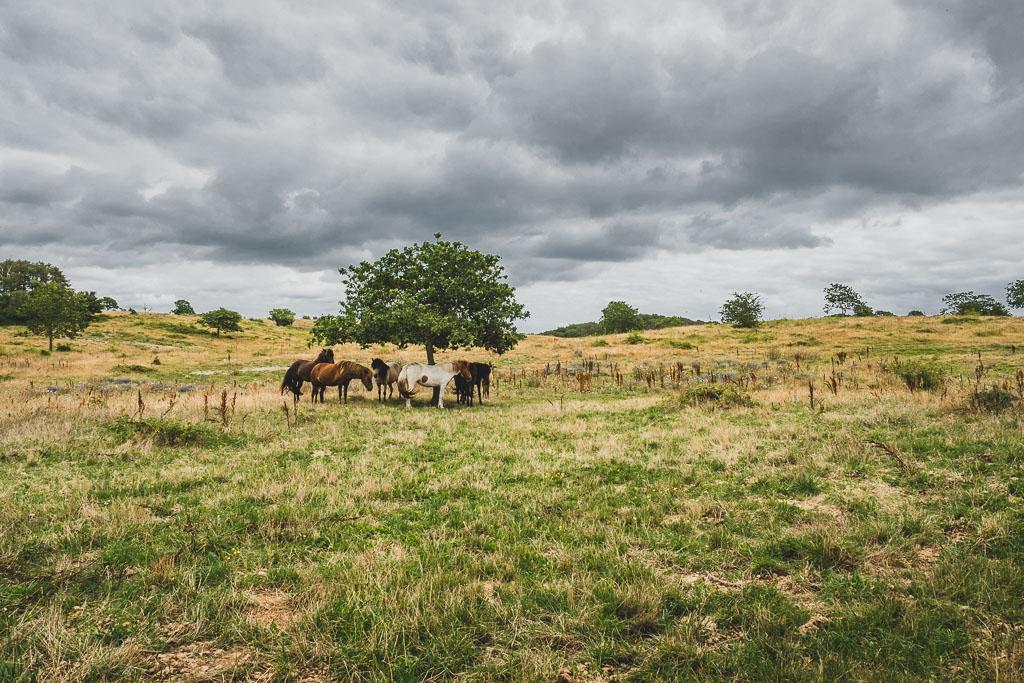 Wandern Nationalpark Mols Bjerge Urlaub in Djursland: Ausflugsziele und Sehenswürdigkeiten rund um Ebeltoft Dänemark