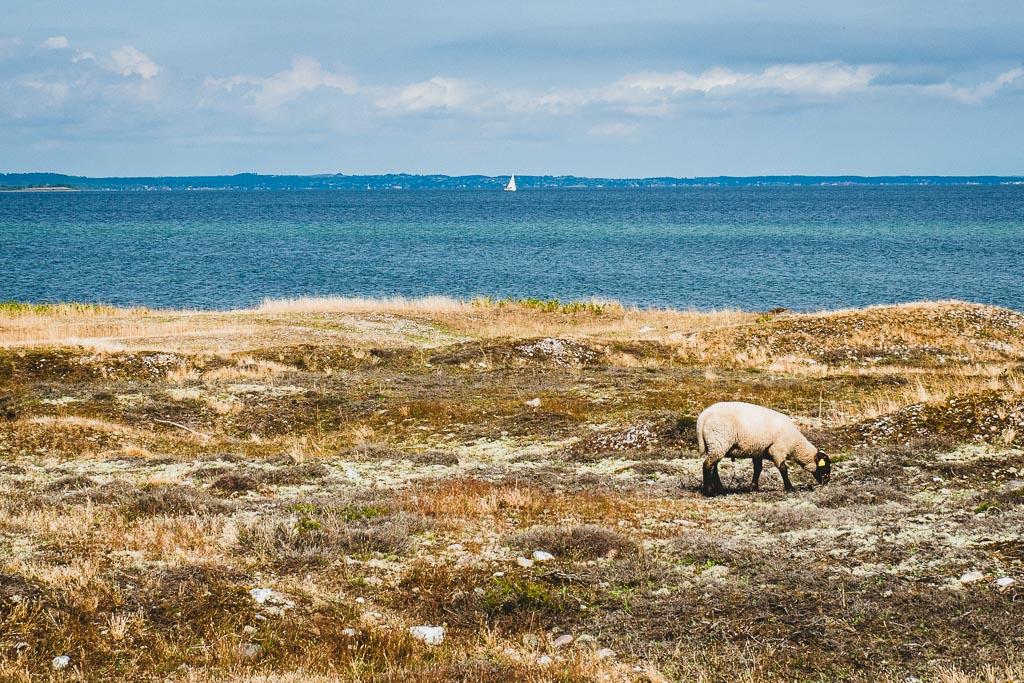Strand im Nationalpark Mols Bjerge in Dänemark Urlaub in Djursland: Ausflugsziele und Sehenswürdigkeiten rund um Ebeltoft Dänemark
