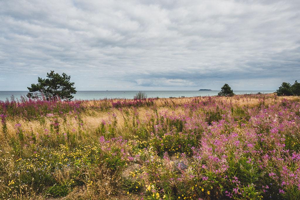 Tronjavey Strand Dänemark Urlaub in Djursland: Ausflugsziele und Sehenswürdigkeiten rund um Ebeltoft Dänemark