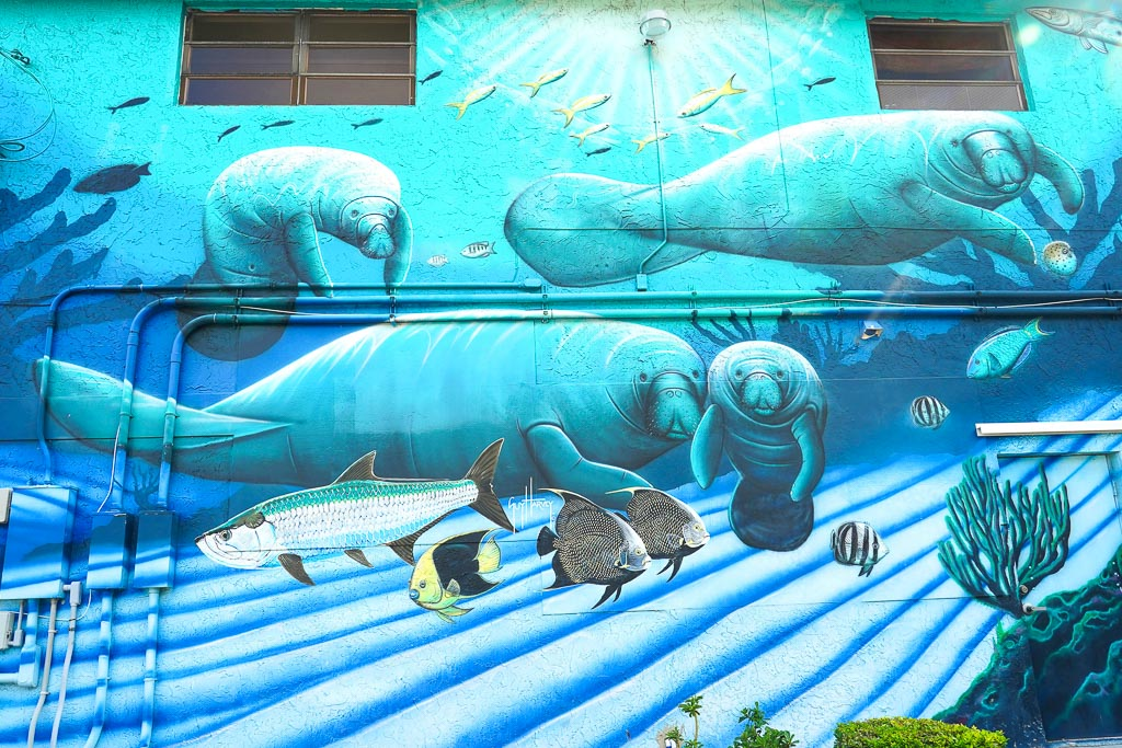 Mural history of diving manatee (c) Rob O'Neal