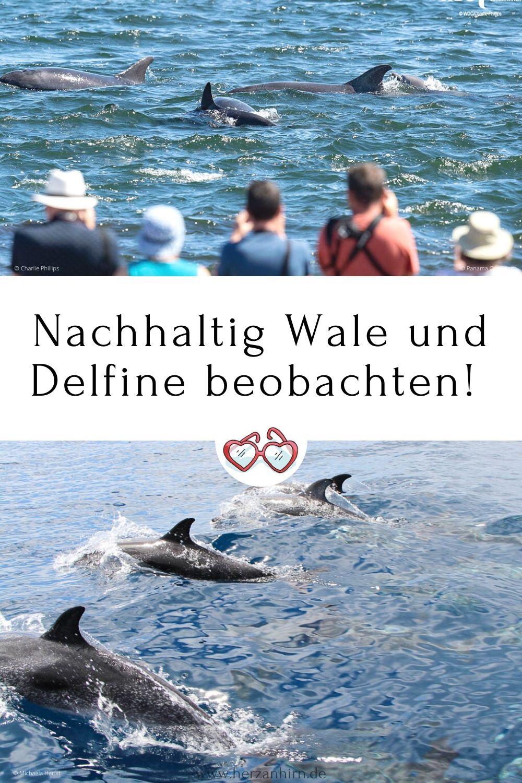 Nachhaltig Wale und Delfine beobachten!