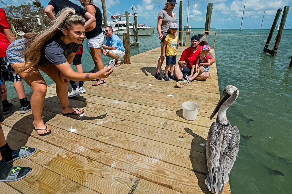 Robbie's Marina Florida Keys(c) Andy Newman Florida Keys News Bureau