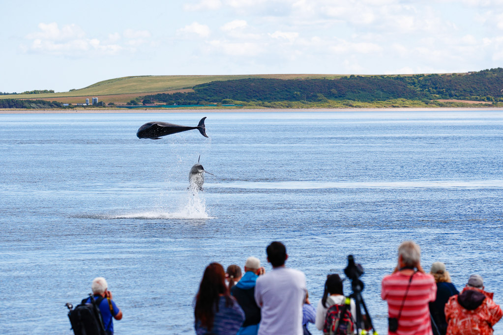 Wale beobachten am Chanonry Point in Schottland (c) Charlie Phillips
