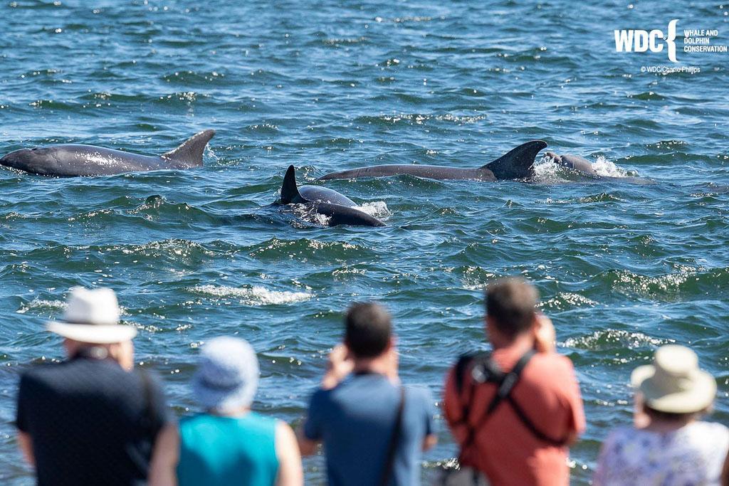 Wale und Delfine beobachten – weltweit und in Deutschland
