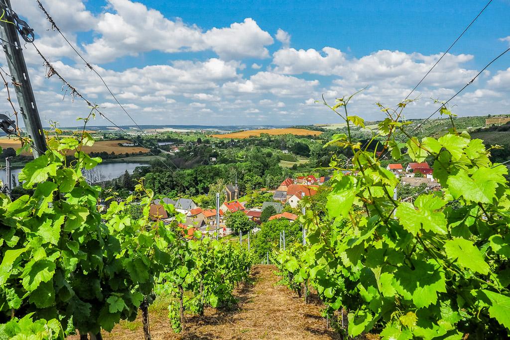 Saale Unstrut Region Weinsicht Höhenstedt
