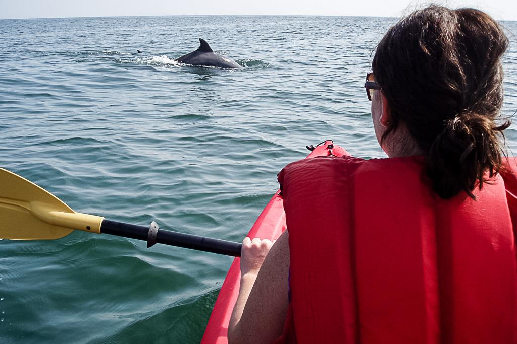 Capital Region USA Virginia Kayak mit Delfinen