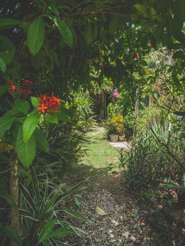 Barney's Flowers & Hummingbird Garden in Negril Sehenswürdigkeit Jamaika