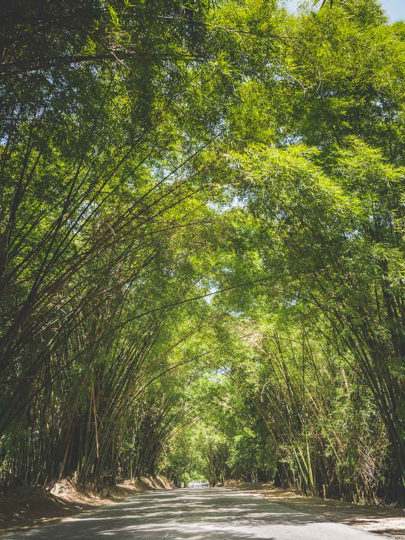 Bamboo Avenue Sehenswürdigkeit Jamaika